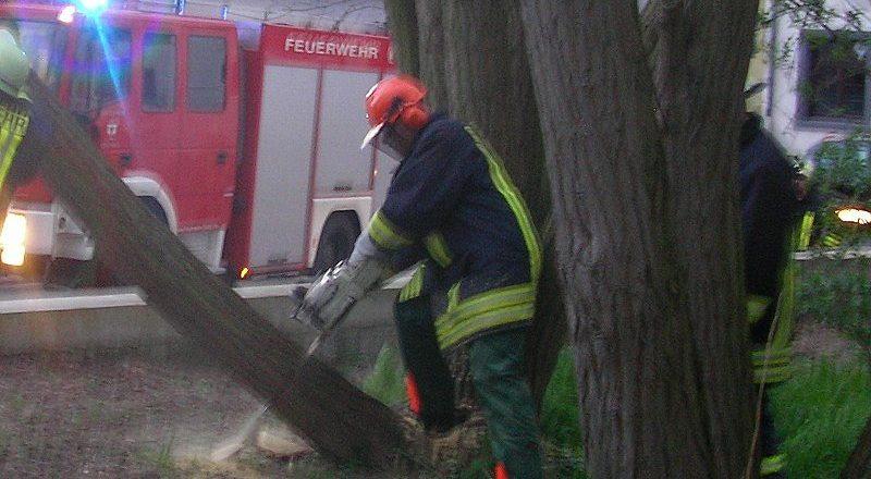 Mit der Kettensäge wird der Baum gefällt