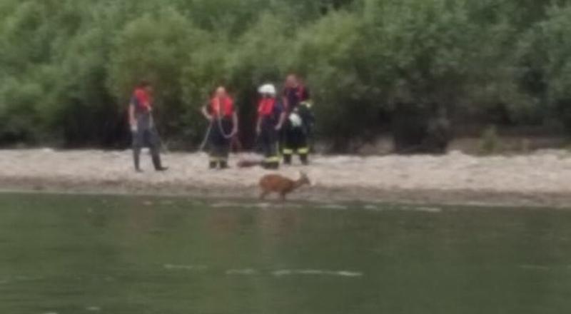 Tierrettung am Rhein in Höhe des Bootshaus