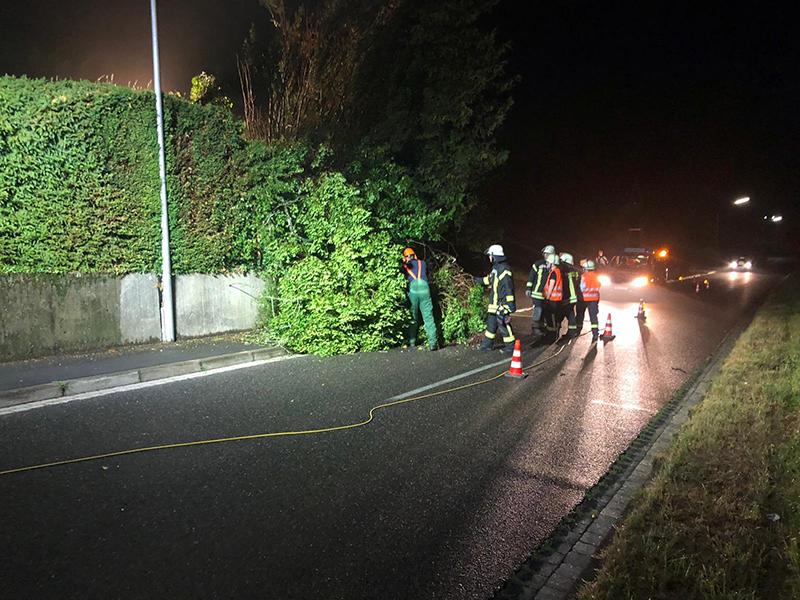 27.07.2019 - Baum auf Fahrbahn - Koisdorfer Strasse