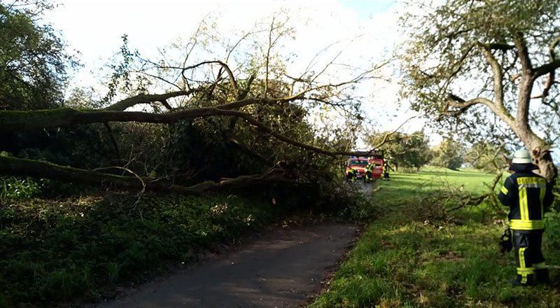 11.10.2020 - Baum auf Radweg